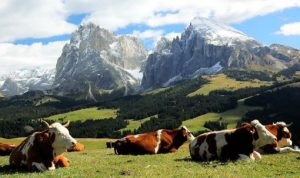 Alpine Grazing 2