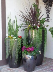 potted-plants-1