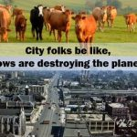 cows-city-folks-2